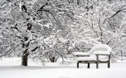 beautiful-winter-beautiful-bench-lovely-nature-pretty-snow-winter